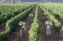 produccion-de-vino-y-biodiversidad-afectadas-2013048070549-84bfb4ae2931d288d7d55c9c4ee2548b